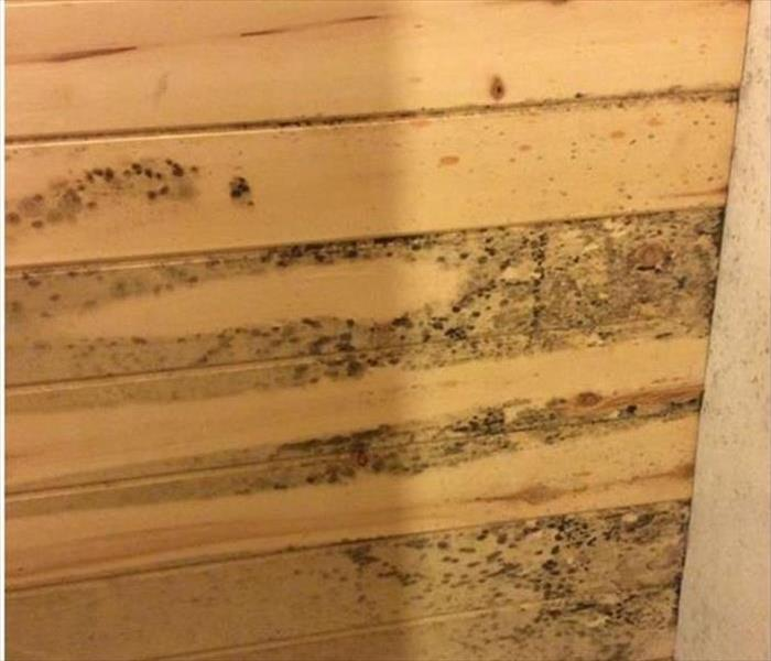 Log Cabin and Mold Remediation--Charleston Before
