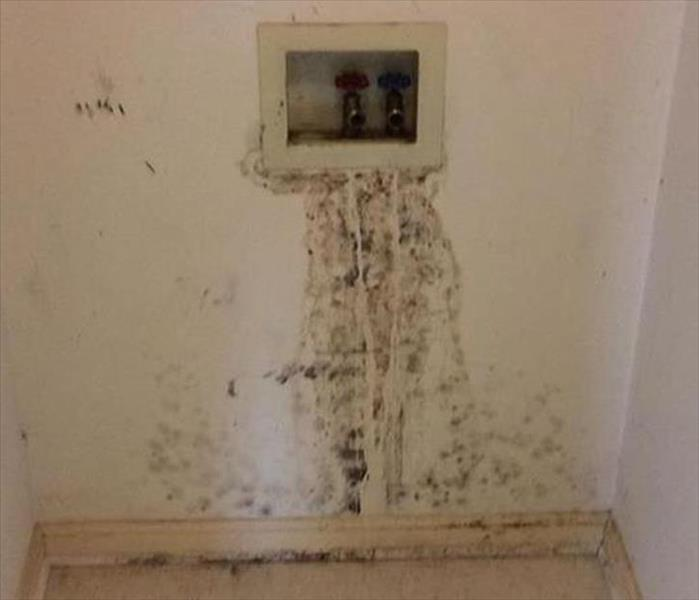 Mold Growth in a Charleston Utility Closet Before