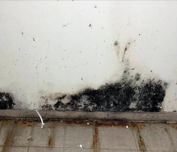 Mold Remediation In Charleston