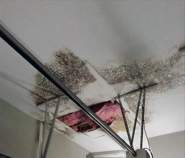 Mold Damage Remediation In Charleston