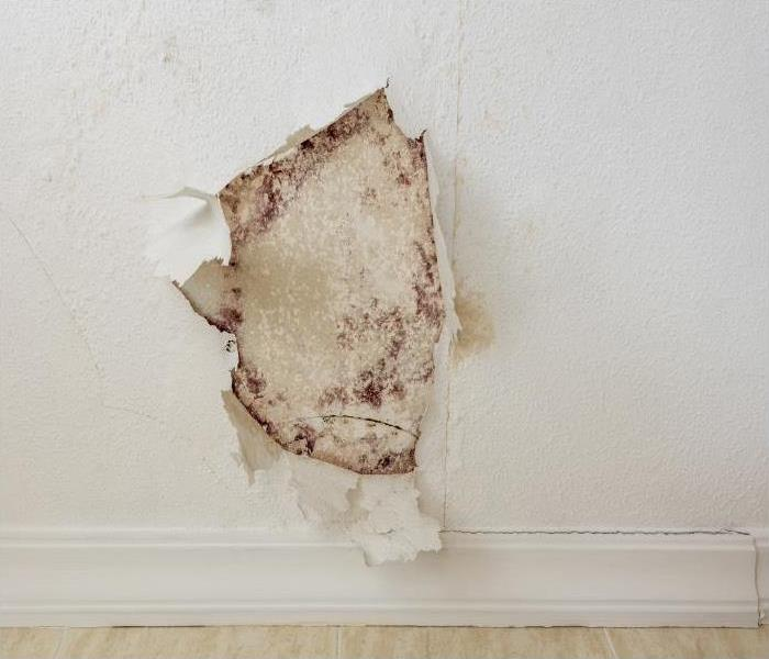 Why SERVPRO If Mold Plagues Your Charleston Home, You Need To Call A Professional Restoration Company!