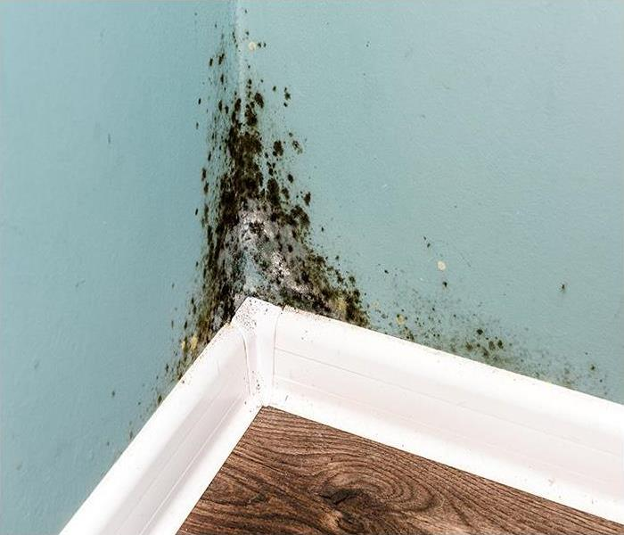 Mold Remediation Cleaning Mold Damage From Charleston Homes
