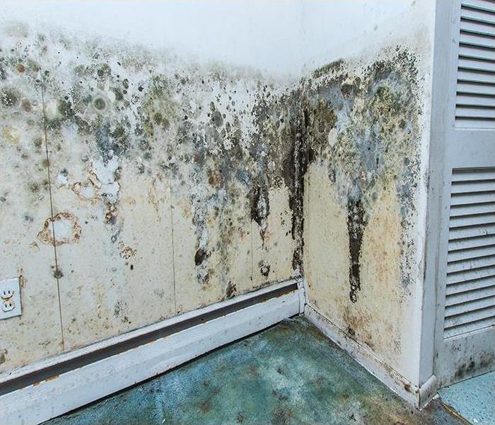 Mold Remediation Our 4 Step Process To Make Sure Your Charleston Home Is Mold Free