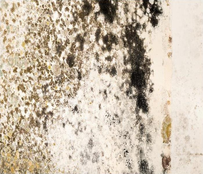 Mold Remediation Remediating Mold Damage In Charleston